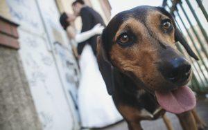 wedding-augsburg-007